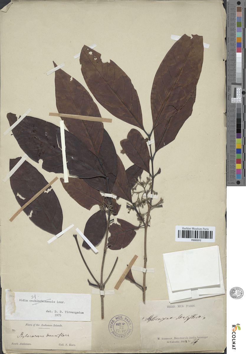 Planche botanique - Projet recherche E-Recolnat